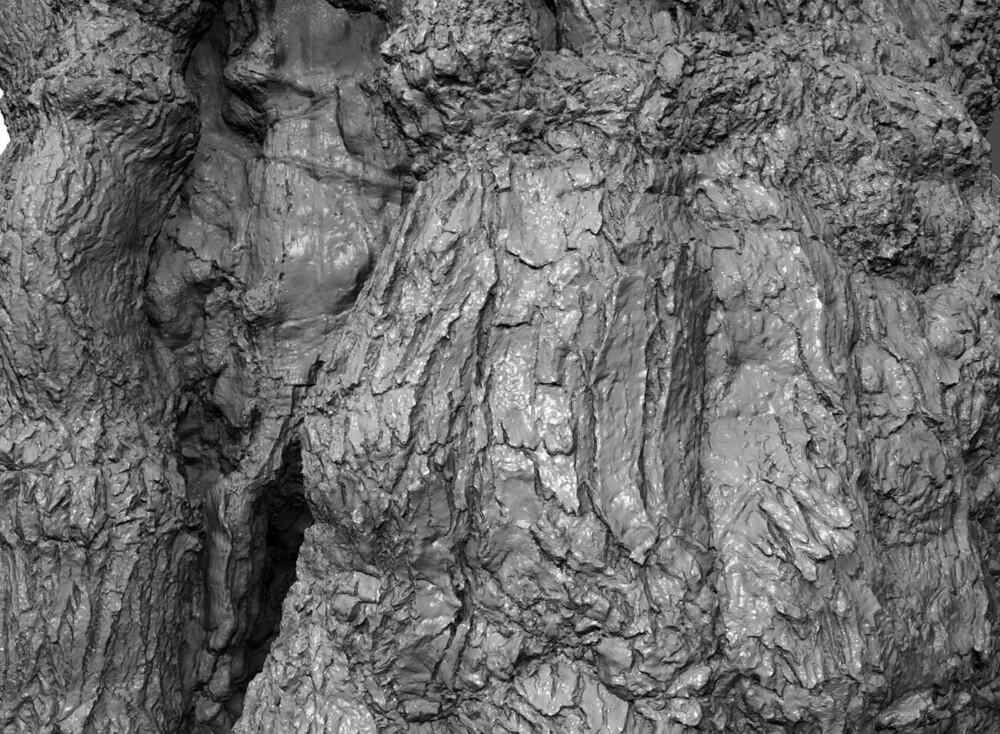 Skovfogedegen 3d scan bark