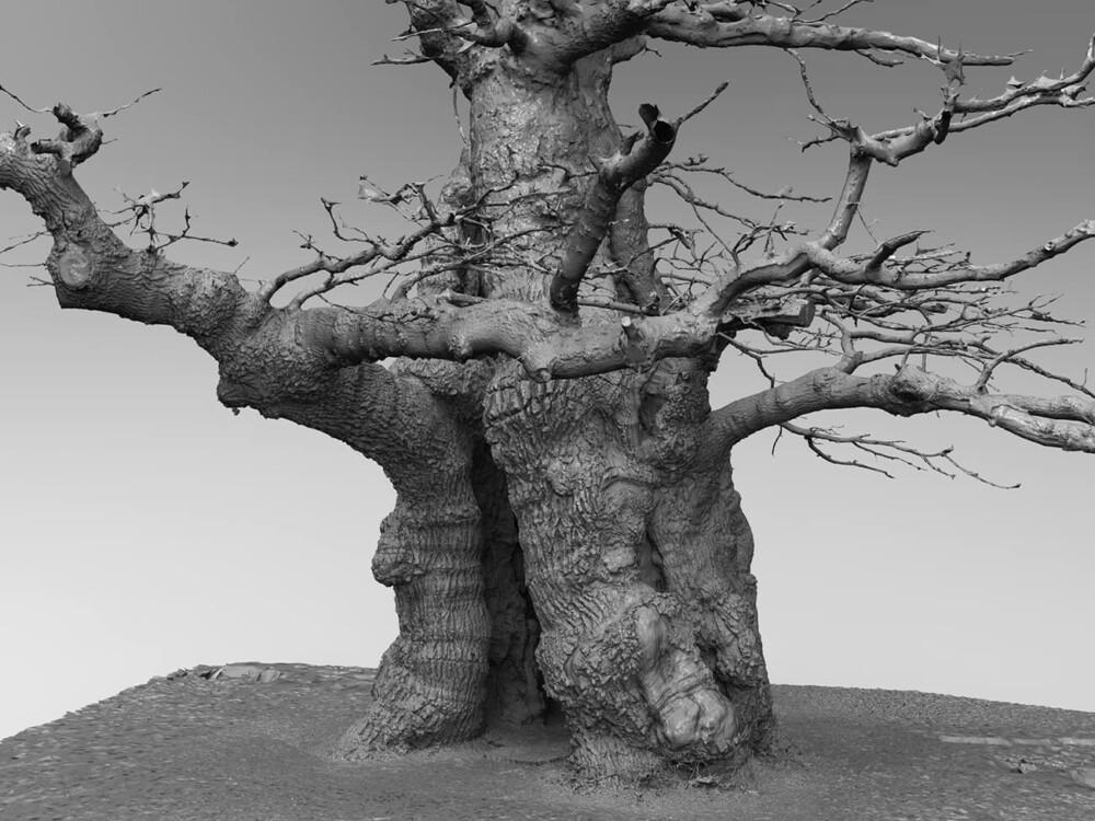 skovfogedegen oak tree 3d scan 2