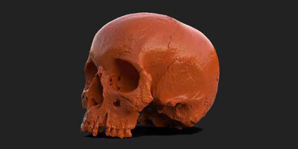 hammerhus skull 3d scan 3