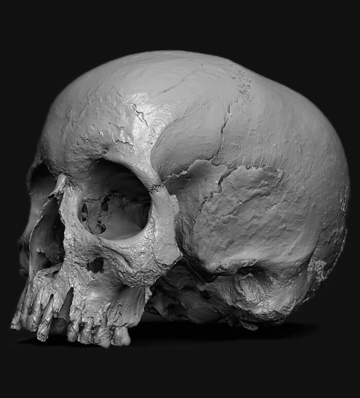 skull 3dscan rigsters 2