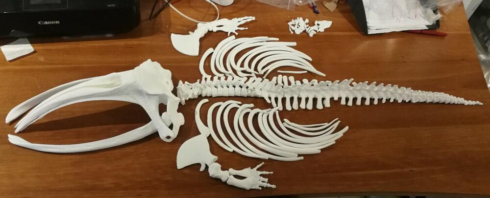 whale vertebrae 3d print