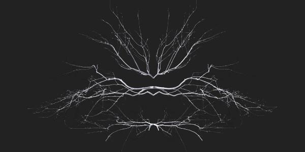 tree 3d scan